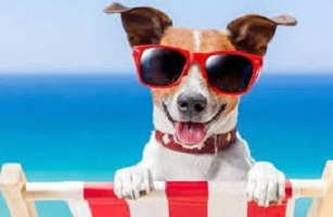 In viaggio con i propri animali: l'Italia al top nel turismo pet-friendly